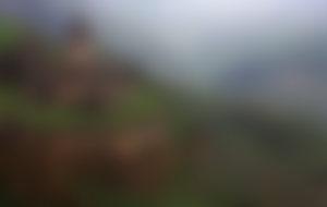 Envios a Armenia baratos
