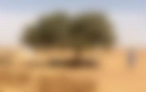 Envios a Níger baratos