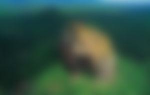 Envios a Sri Lanka Express
